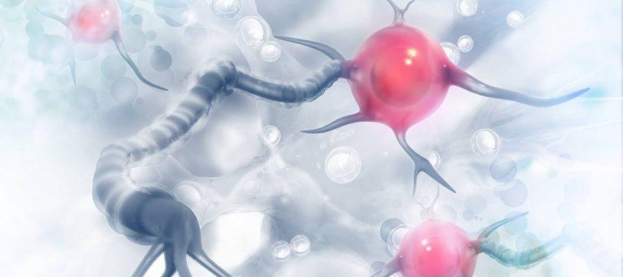 Leptin On scientific background-